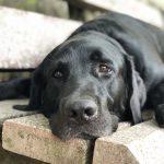 Ein Interview über Gelenkserkrankungen bei Hunden