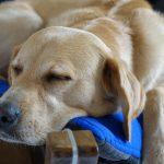 Quando possono essere utili la fisioterapia e l'osteopatia animale?